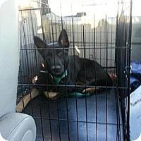 Adopt A Pet :: Tomahawk - selden, NY