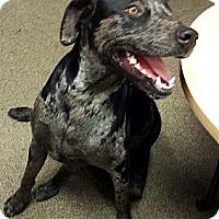 Adopt A Pet :: Lady - Scottsdale, AZ