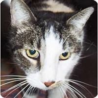 Adopt A Pet :: Big Boy - Phoenix, AZ