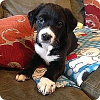 Adopt A Pet :: Finney Hans - Homewood, AL