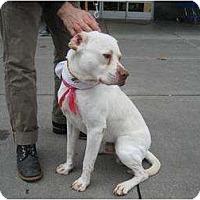 Adopt A Pet :: Mopey - AMAZING DOG!!! - Seattle, WA