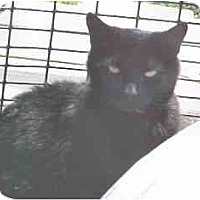 Adopt A Pet :: Deanna - Lunenburg, MA