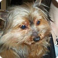 Adopt A Pet :: Pippen - Lorain, OH