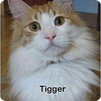 Adopt A Pet :: Tigger - Portland, OR