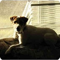 Adopt A Pet :: Tango in Conroe - Houston, TX