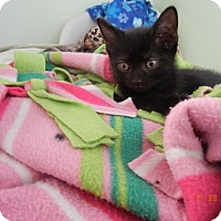 Adopt A Pet :: Jinx - Southington, CT