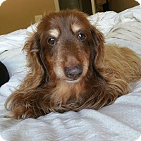 Adopt A Pet :: Love - Decatur, GA