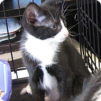 Adopt A Pet :: Willy - bloomfield, NJ