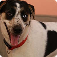 Husky Mix Dog for adoption in New York, New York - Mars
