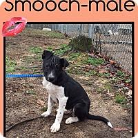 Adopt A Pet :: Smooch (Pom) - Hagerstown, MD