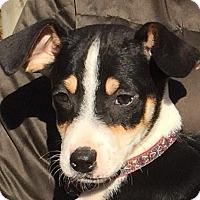 Adopt A Pet :: Alfonzo - Pewaukee, WI
