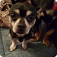 Adopt A Pet :: Bandit - Andalusia, PA