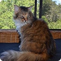 Adopt A Pet :: Maddie - Novato, CA