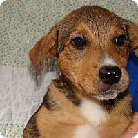 Adopt A Pet :: Payton - Oviedo, FL