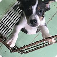 Adopt A Pet :: Frederic - Gadsden, AL