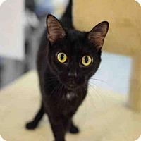 Adopt A Pet :: SYDNEY - Atlanta, GA