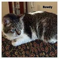 Domestic Mediumhair Cat for adoption in Monrovia, California - Rowdy
