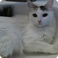 Adopt A Pet :: Dutchess - Lancaster, CA
