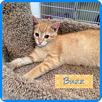 Adopt A Pet :: BUZZ aka MILO - Hamilton, NJ