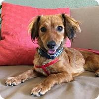 Adopt A Pet :: Meeting Pending - Ruby - Pleasant Hill, CA
