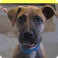 Adopt A Pet :: MAXINE - Red Bluff, CA
