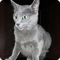 Adopt A Pet :: Grace - Albemarle, NC