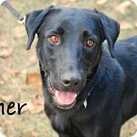 Adopt A Pet :: Cher - Minneola, FL