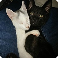 Adopt A Pet :: Whitie & Blackie/KK - White Bluff, TN