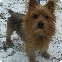 Adopt A Pet :: Charlie - Ceres, VA