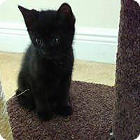 Adopt A Pet :: jasper - Hollywood, FL