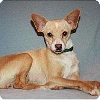 Adopt A Pet :: Chloe - Modesto, CA