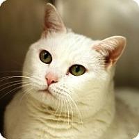 Adopt A Pet :: Sarah - Norwalk, CT