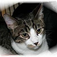 Adopt A Pet :: Dillon - Montgomery, IL