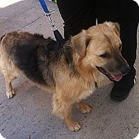 Adopt A Pet :: Brewster - Nashville, TN