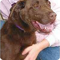 Adopt A Pet :: Shelly - Cumming, GA