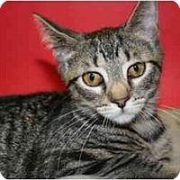 Adopt A Pet :: CAROL - SILVER SPRING, MD
