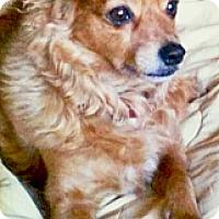 Adopt A Pet :: Milo lifemate to Lola - Sacramento, CA