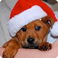 Adopt A Pet :: Talia - Randolph, NJ