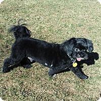 Adopt A Pet :: Jorey - Ft. Collins, CO