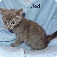 Adopt A Pet :: Jed - Bentonville, AR
