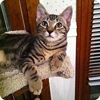 Adopt A Pet :: Theo - Watkinsville, GA