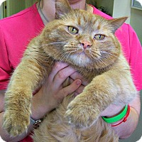 Adopt A Pet :: Conan (4 paw declaw) - Toledo, OH