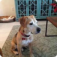 Adopt A Pet :: Dundee - Tampa, FL