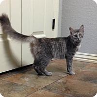 Adopt A Pet :: Flossie - Bentonville, AR
