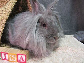 Lionhead Mix for adoption in Newport, Delaware - Anisa