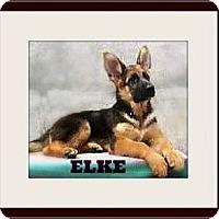 Adopt A Pet :: Elke - Rancho Cucamonga, CA