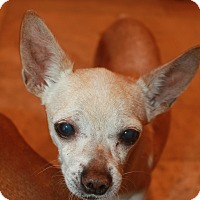 Adopt A Pet :: Peewee - Buckeye, AZ