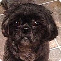 Adopt A Pet :: Loki - Mississauga, ON