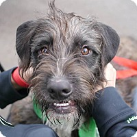 Adopt A Pet :: Benji - Fairfax, VA