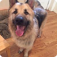 Adopt A Pet :: Buddy - Vacaville, CA